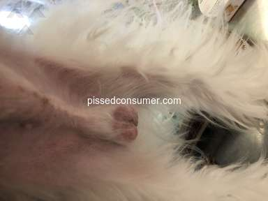 Pet Supplies Plus - Horrible Grooming And Possible Abuse
