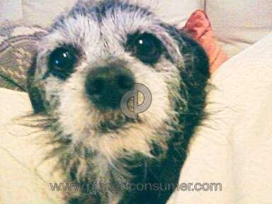 Vca Animal Hospital Pet Medicine and Veterinary Clinics review 13215