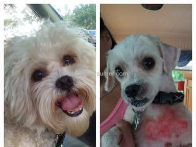 Petsmart Dog Grooming Service review 149048