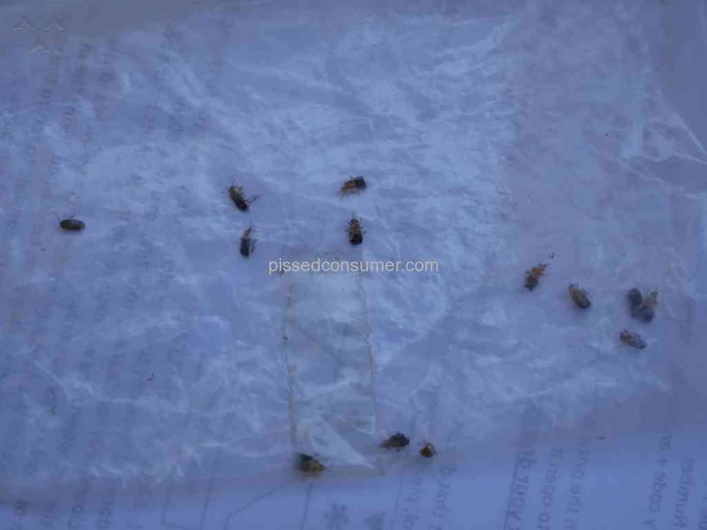 Booking.com does not guarantee no bed bugs in your room Feb 18 ...