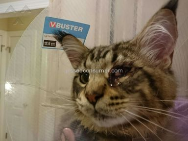 Bad Cat Breeders - Bad Maine Coon Breeder. Don't buy from this cattery.
