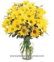 Justflowers Daisies Flowers