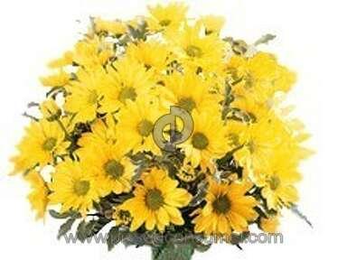 Justflowers Daisies Flowers review 148570