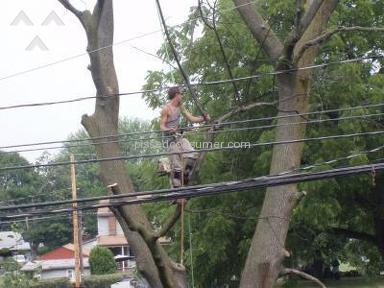 Penn Jersey Tree Service Landscaping and Gardening review 4657