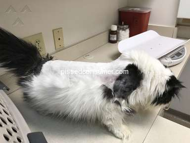 Petsmart Cat Grooming Service review 281634