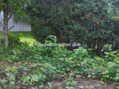 Petersons Property Maintenance Tree Removal review 328462