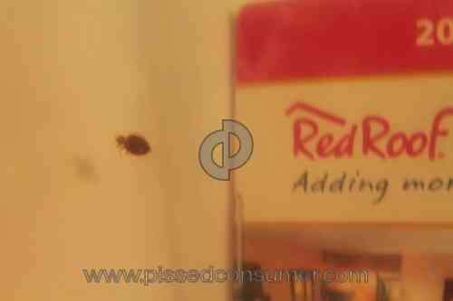 Red Roof Inn Warren Mi Bed Bugs