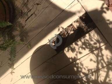Behr Deckover Deck Paint review 137535