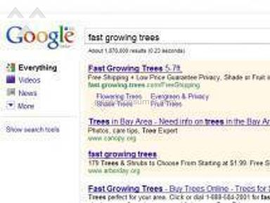 Fast Growing Trees Flowers / Florist review 3265