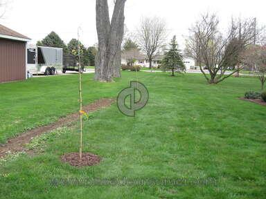 Brighter Blooms Nursery Eastern Redbud Tree review 132889