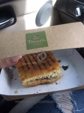 Panera Bread Roasted Turkey And Caramelized Kale Panini