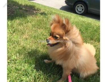 Pet City Pets Grooming Service Review from Simi Valley, California