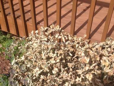 Trugreen Landscaping and Gardening review 94235
