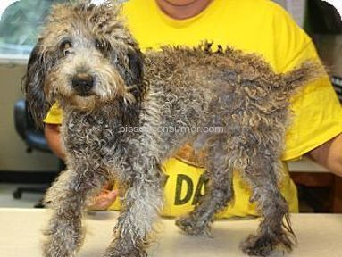 One Step Closer Animal Rescue - Review in Animal Services category from Stafford Township, New Jersey