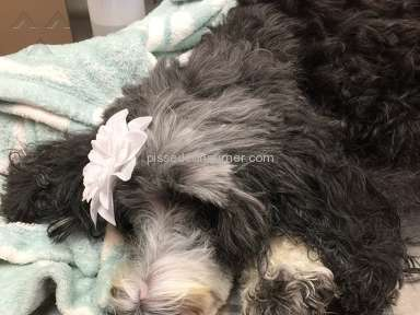 Banfield Pet Hospital - Wellness Plan Review from Webb, Alabama