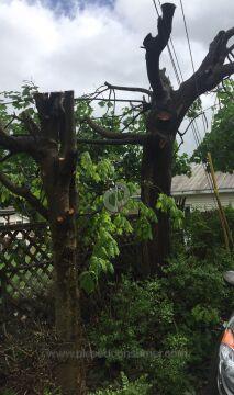 Jaflo Tree Removal