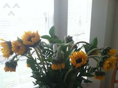 Avasflowers Arrangement review 32911