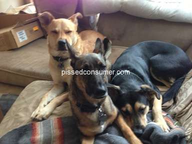 Westside German Shepherd Rescue - WSGSR is an amazing place